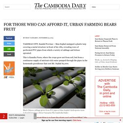 For Those Who Can Afford It, Urban Farming Bears Fruit - The Cambodia Daily