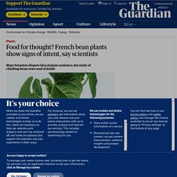 Food for thought? French bean plants show signs of intent, say scientists