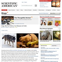 Dogs, But Not Wolves, Use Humans As Tools