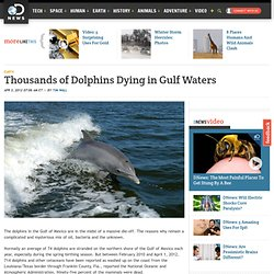 Thousands of Dolphins Dying in Gulf Waters