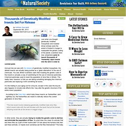 Thousands of Genetically Modified Insects Set For Released : Natural Society - Nightly
