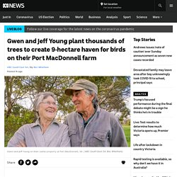 Gwen and Jeff Young plant thousands of trees to create 9-hectare haven for birds on their Port MacDonnell farm - ABC News