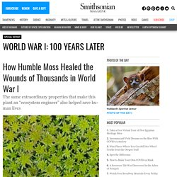How Humble Moss Healed the Wounds of Thousands in World War I