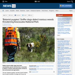 'Botanist puppies': Sniffer dogs detect noxious weeds
