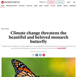 Climate change threatens the beautiful and beloved monarch butterfly