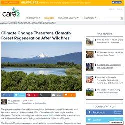 Climate Change Threatens Klamath Forest Regeneration After Wildfires