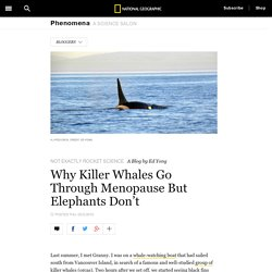 Why Killer Whales Go Through Menopause But Elephants Don't
