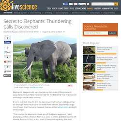Secret to Elephants' Thundering Calls Discovered | Vocal Cords & Voice