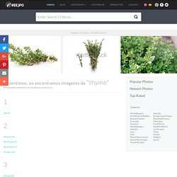 thyme photos - Free Images on Freejpg