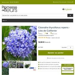 Ceanothus thyrsiflorus repens - Lilas de Californie - Arbuste donnant d'abondantes fleurs bleu ciel.