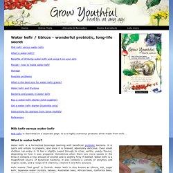 Water kefir tibicos, recipe, grains, benefits, probiotic bacteria yeasts