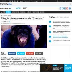 "Tiby, la chimpanzé star de ""Chocolat"""