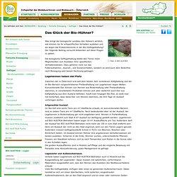 Das Glück der Bio-Hühner? / Geflügel / Tierische Erzeugung / Beratung / BIOBAUERN / Portal - Bio Austria