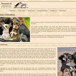 Hunderassen - Chihuahua - die kleinste anerkannte Hunderasse der Welt