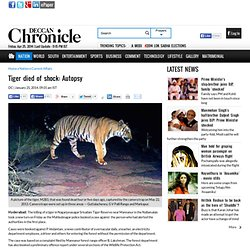 Tiger died of shock: Autopsy