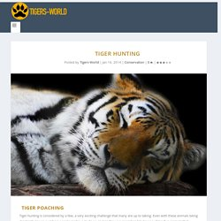 Tiger Hunting - Tiger Facts and Information