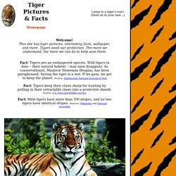 Tiger Pictures & Facts