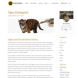 Tigers Endangered - Tiger Facts and Information