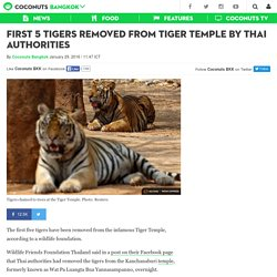 First 5 tigers removed from Tiger Temple by Thai authorities