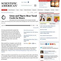 Lions and Tigers Bear Vocal Cords for Roars: Scientific American Podcast