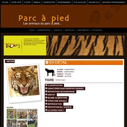 Tigre, parc animalier, tigres, zoo