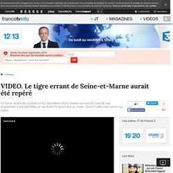 Le tigre errant de Seine-et-Marne aurait été repéré