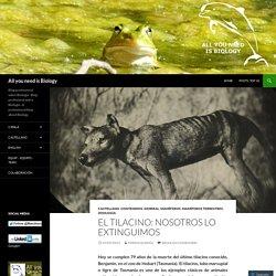 El tilacino: nosotros lo extinguimos