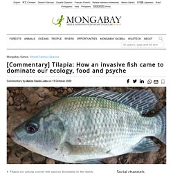 MONTABAY 15/10/20 Tilapia: How an invasive fish came to dominate our ecology, food and psyche