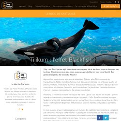 Tilikum : l'effet Blackfish - One Voice