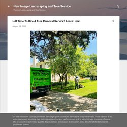 Is It Time To Hire A Tree Removal Service? Learn Here!