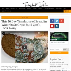 This 16 Day Timelapse of Bread in Water is So Gross but I Can't Look Away