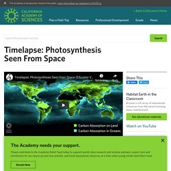Video: Timelapse: Photosynthesis Seen From Space