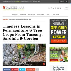 Timeless Lessons in Permaculture & Tree Crops From Tuscany, Sardinia & Corsica - Walden Labs