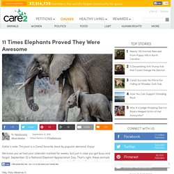11-times-elephants-proved-they-were-awesome