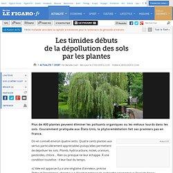Les timides débutsde la dépollution des solspar les plantes