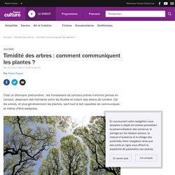Timidité des arbres : comment communiquent les plantes ?