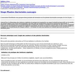 Stage Plantes tinctoriales sauvages - FloréMonts