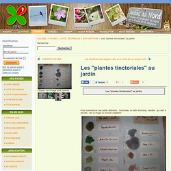 """Les """"plantes tinctoriales"""" au jardin"""