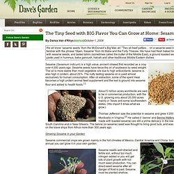how to grow sesame seeds