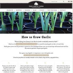 The Garlic Farm - for all things garlic
