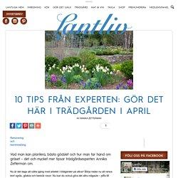 10 tips från experten: Gör det här i trädgården i april
