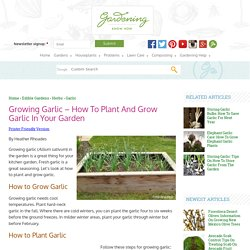 Tips For Growing Garlic