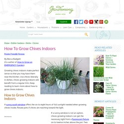 Tips For Growing Chives Indoors
