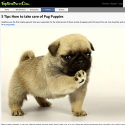 5 Tips How to take care of Pug Puppies