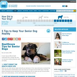 5 Tips to Keep Your Senior Dog Healthy