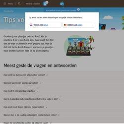 Tips voor je moestuintje - Albert Heijn