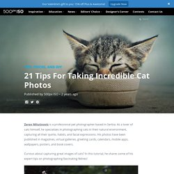 21 Tips For Taking Incredible Cat Photos