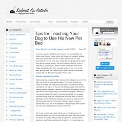 Tips for Teaching Your Dog to Use His New Pet Bed