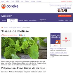 Tisane de mélisse : utilisation et vertus - Ooreka
