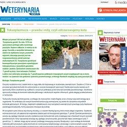 Toksoplazmoza – prawda i mity, czyli odczarowujemy kota